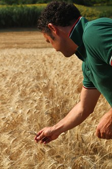 Massimo and his wheat...