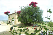 Typical farmhouse in need of restoration located in a land surrounded by vineyards and olive groves.